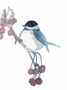 chickadee ctout colour