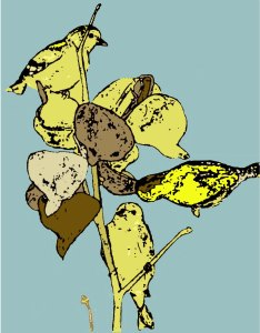 goldfinch graphic PS colour