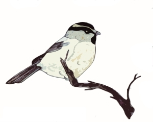 White-Browed Tit